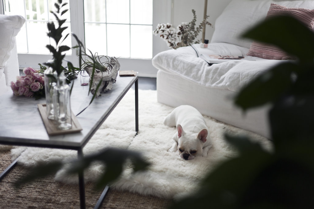 frenchie-sun-bathing-maistylepages-by-sophie-cecile-xu-1.jpg