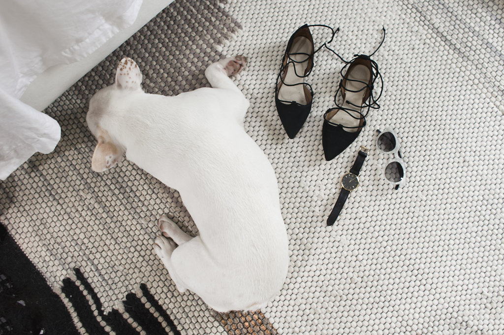 frenchie-and-shoes-maistylepages-by-sophie-cecile-xu.jpg